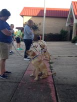 obedience class 6-23-2014