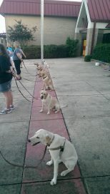 obedience class 7-7-14