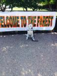 Naaman Forest High School