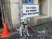 NO balloons!