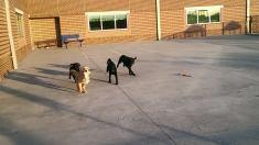 Pups on the run!!